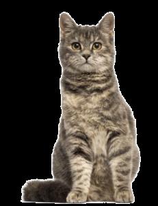 pet-shop-alimenti-gatto